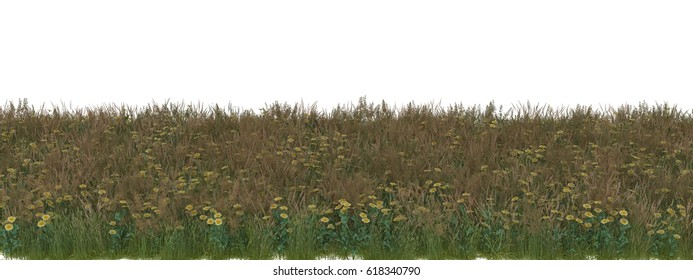 3d rendered  Yellow daisy and green grass Field with alpha channel