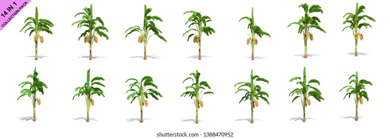 3D rendering - 14 in 1 collection of banana trees isolated over a white background use for natural poster or  wallpaper design, 3D illustration Design.