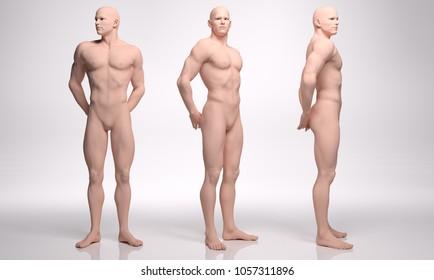 3D Rendering : 3 standing male bodies illustration , Mesomorph men