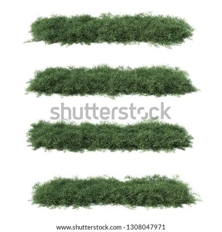 3 D Rendering Acacia Redolens Stock Illustration Royalty Free