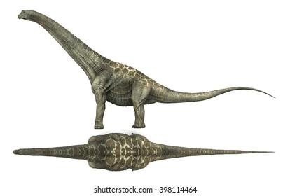 3D Rendering of Alamosaurus.