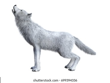 3D rendering of an arctic wolf isolated on white background