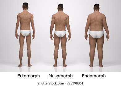 3D Rendering : Back view of  standing male body type : ectomorph (skinny type), mesomorph (muscular type), endomorph(heavy weight type)