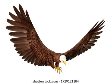 3D rendering of a bald eagle isolated on white background