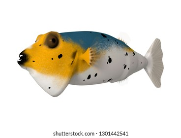 3D rendering of a blackspotted puffer fish or dog-faced puffer isolated on white background