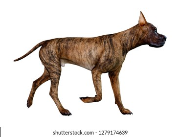 3D rendering of a brindle Great Dane dog isolated on white background