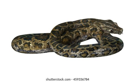 3D rendering of a Burmese python or Python bivittatus, one of the largest snakes in the world