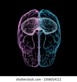 3D Rendering of Cerebrum and Cerebellum with Tinted Hemispheres