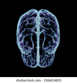 3D Rendering of Cerebrum Isolated on Black Background