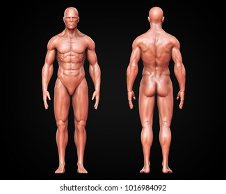 3D Rendering, Conceptual human muscle, Skin shade anatomy man front and back view on dark background, with clipping path.