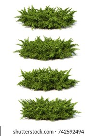 3d rendering of Creeping Juniper