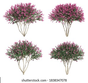 3d rendering of Crepe myrtle tree with work path
