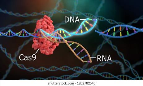 3D Rendering Crispr DNA Editing