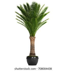3d rendering date palm