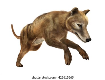 3D rendering of a died animal thylacine isolated on white background