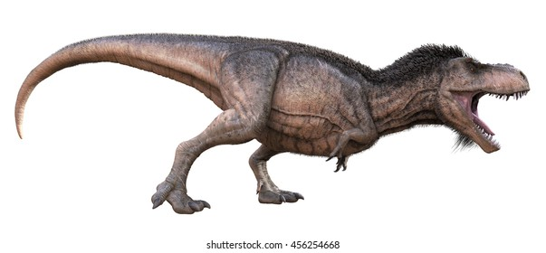 3D Rendering of a downy feathered Tyrannosaurus Rex.