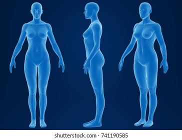 3d rendering of a female body