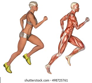 3d rendering fitness woman with two shape one with normal skin and one with anatomical muscle skin running isolated on white