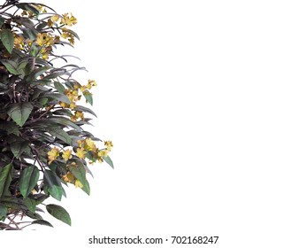3d rendering of a foreground flower branch isolated on white