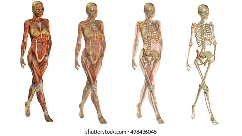 Female Skeleton Images Stock Photos Vectors Shutterstock