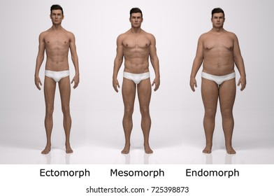 3D Rendering : Front view of  standing male body type : ectomorph (skinny type), mesomorph (muscular type), endomorph(heavy weight type)
