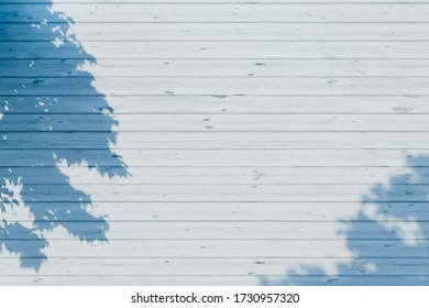 3D rendering graphics of the shade of a tree that fell on the white wood grain wall. Background material of refreshing sunlight.