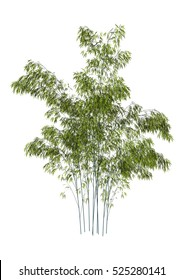 3D rendering of a green bamboo tree isolated on white background
