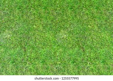 3d rendering of green grass floor