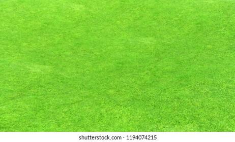 3d rendering of green vegetation ground