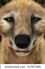 3D rendering of a head of a died animal thylacine , closeup