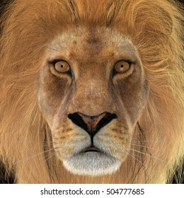 3D rendering of a head of a male lion, closeup