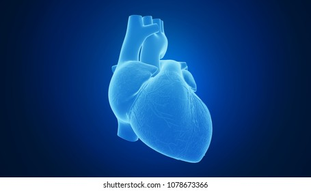 3d rendering of a heart