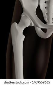 3d rendering of hip joint area, showing the femur articulating with the acetabulum