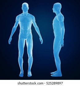 3d rendering of an human body from side and front