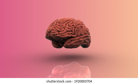 3D Rendering, Human brain on a pink background.