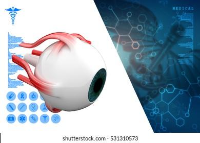 3d rendering Human Eye Anatomy