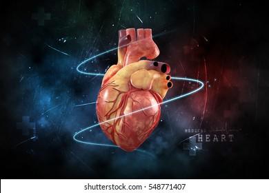 3d rendering Human Heart - Anatomy of Human Heart