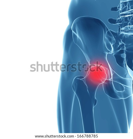 3 D Rendering Human Hip Joint X Ray Stock Illustration 166788785 ...