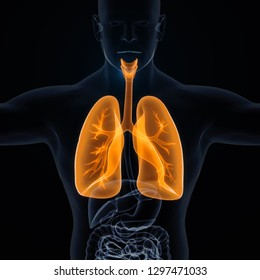 3D Rendering of Human Lungs