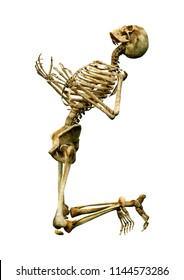 3D rendering of a human skeleton isolated on white background