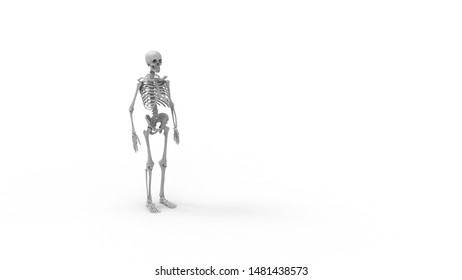 3D rendering of a human skeleton,  isolated on a white background.