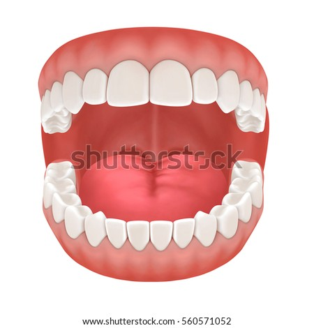 3 D Rendering Human Teeth Open Mouth Stock Illustration 560571052