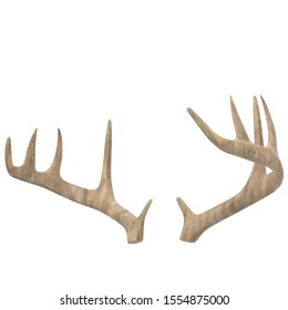 3D rendering illustration of antlers