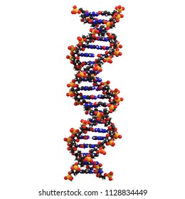 3D rendering illustration of a DNA double helix structure model isolated on a white background