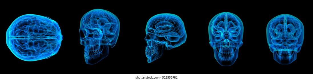 3d rendering illustration of human blue brain X ray collection