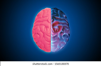 3D rendering illustration human brain left and right cerebral separate with organ pink and colorful glowing purple on dark blue background in top view with clipping path for die cut