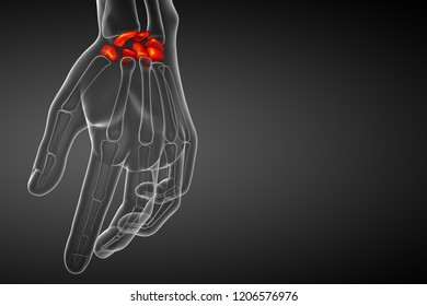3d rendering illustration of the human carpal bones - front view