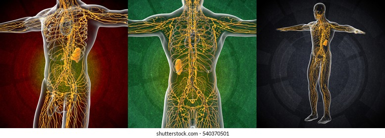 3d rendering illustration of the male yellow lymphatic system x-ray collection