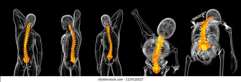 3d rendering illustration  of orange vertebrae x-ray collection