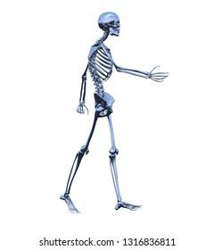3d rendering illustration of skeleton bone anatomy